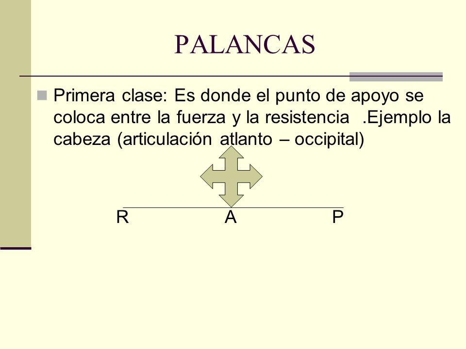 PALANCAS Primera clase: Es donde el punto de apoyo se coloca entre la fuerza y la resistencia.Ejemplo la cabeza (articulación atlanto – occipital) R A