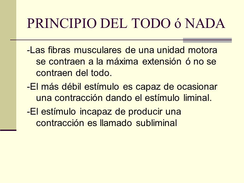 PRINCIPIO DEL TODO ó NADA -Las fibras musculares de una unidad motora se contraen a la máxima extensión ó no se contraen del todo. -El más débil estím