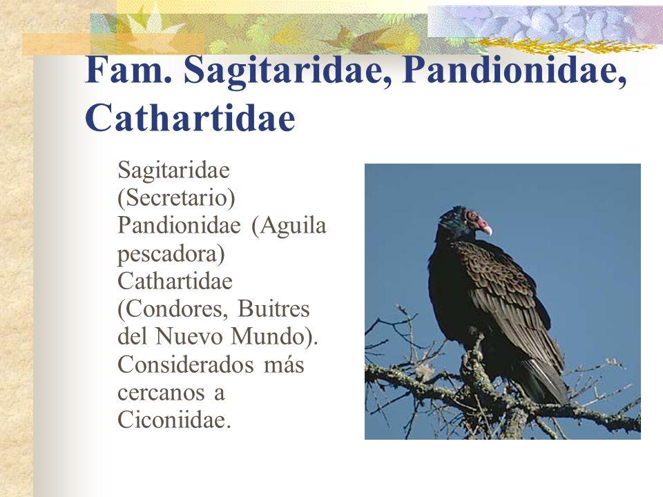 Fam. Sagitaridae, Pandionidae, Cathartidae Sagitaridae (Secretario) Pandionidae (Aguila pescadora) Cathartidae (Condores, Buitres del Nuevo Mundo). Co