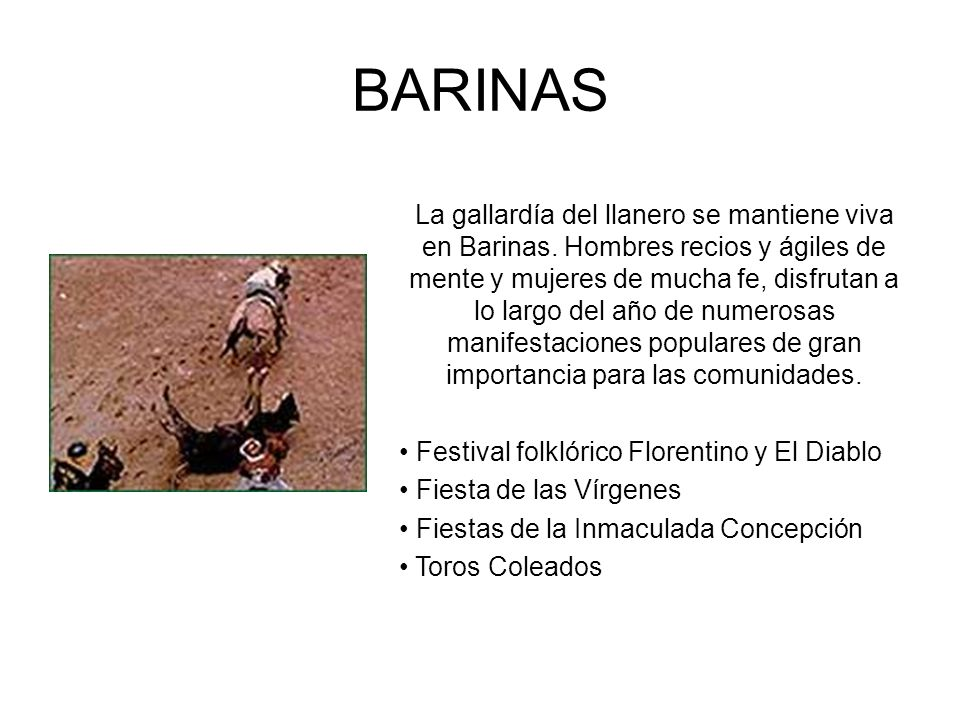 BARINAS La gallardía del llanero se mantiene viva en Barinas. Hombres recios y ágiles de mente y mujeres de mucha fe, disfrutan a lo largo del año de