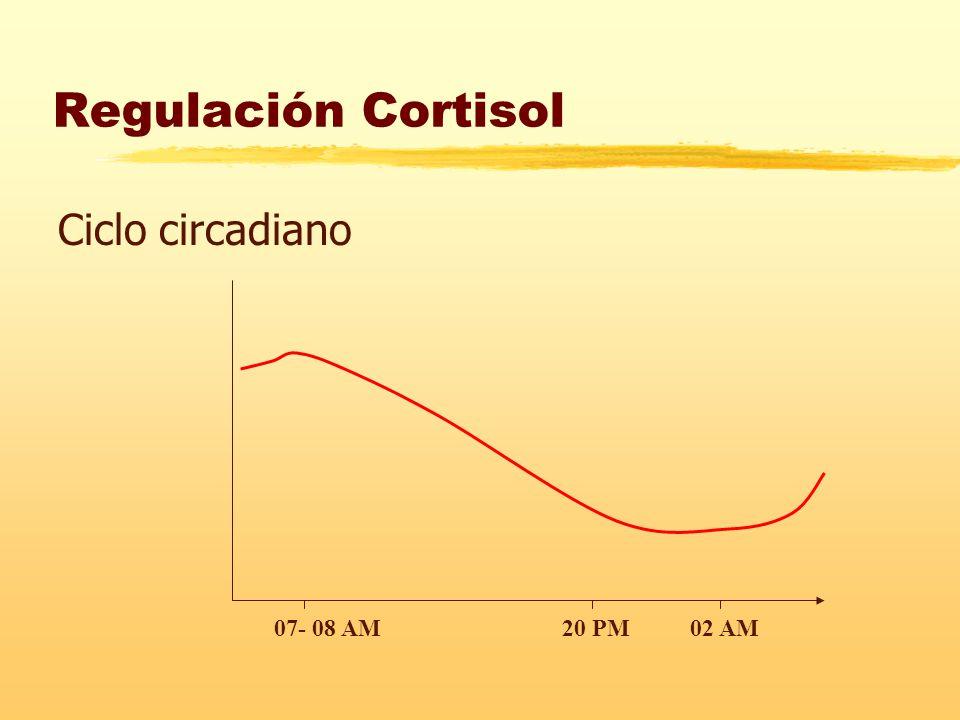 Regulación Cortisol Ciclo circadiano 07- 08 AM20 PM02 AM