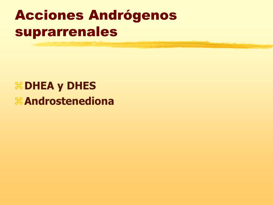 Acciones Andrógenos suprarrenales zDHEA y DHES zAndrostenediona
