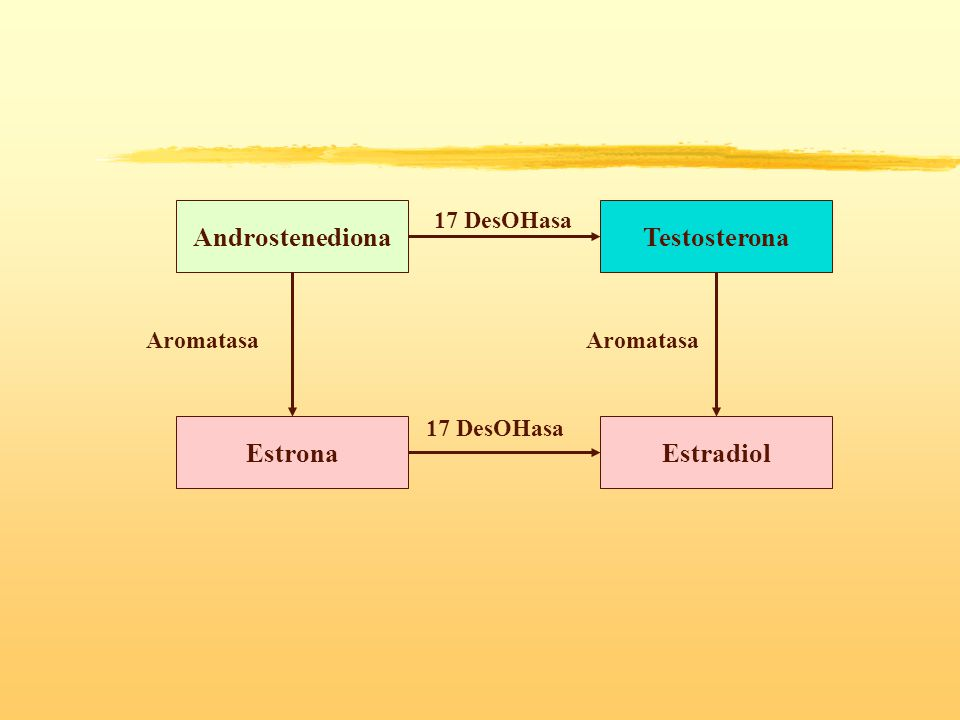 Androstenediona Estrona Testosterona Estradiol 17 DesOHasa Aromatasa