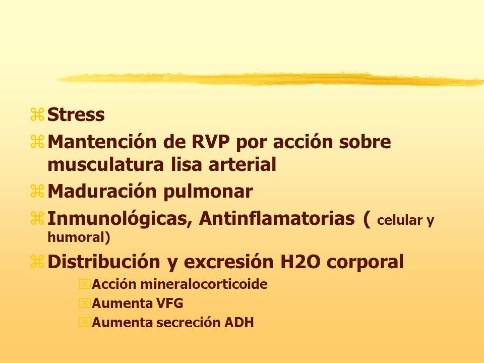 zStress zMantención de RVP por acción sobre musculatura lisa arterial zMaduración pulmonar zInmunológicas, Antinflamatorias ( celular y humoral) zDistribución y excresión H2O corporal xAcción mineralocorticoide xAumenta VFG xAumenta secreción ADH