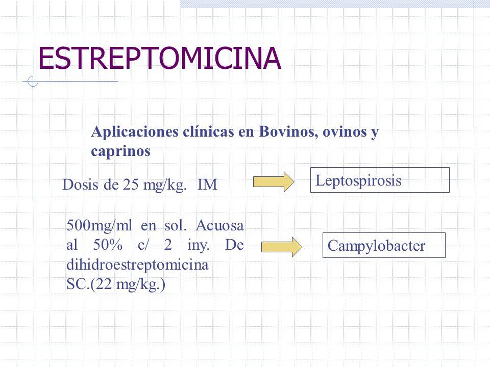 ESTREPTOMICINA Aplicaciones clínicas en Bovinos, ovinos y caprinos Dosis de 25 mg/kg. IM Leptospirosis 500mg/ml en sol. Acuosa al 50% c/ 2 iny. De dih