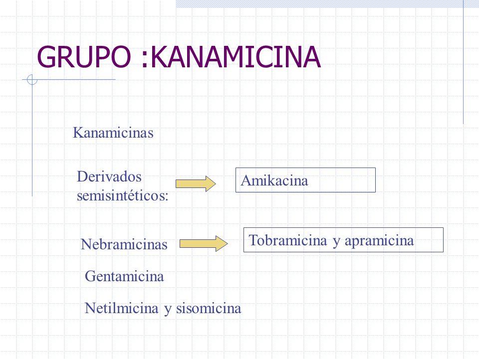 GRUPO :KANAMICINA Kanamicinas Derivados semisintéticos: Amikacina Nebramicinas Tobramicina y apramicina Gentamicina Netilmicina y sisomicina