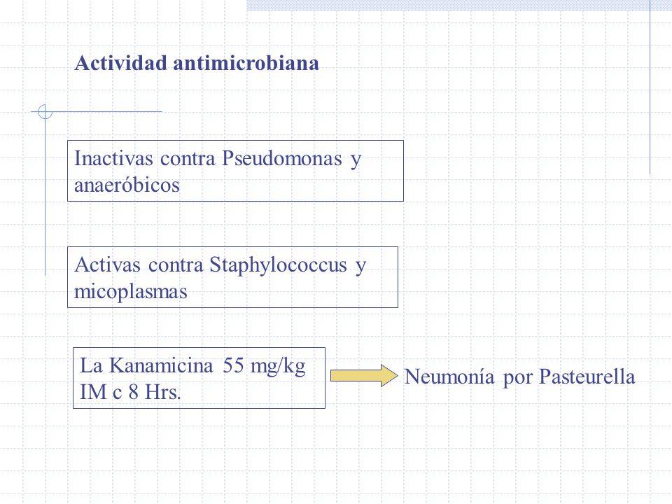 Actividad antimicrobiana Inactivas contra Pseudomonas y anaeróbicos Activas contra Staphylococcus y micoplasmas La Kanamicina 55 mg/kg IM c 8 Hrs.