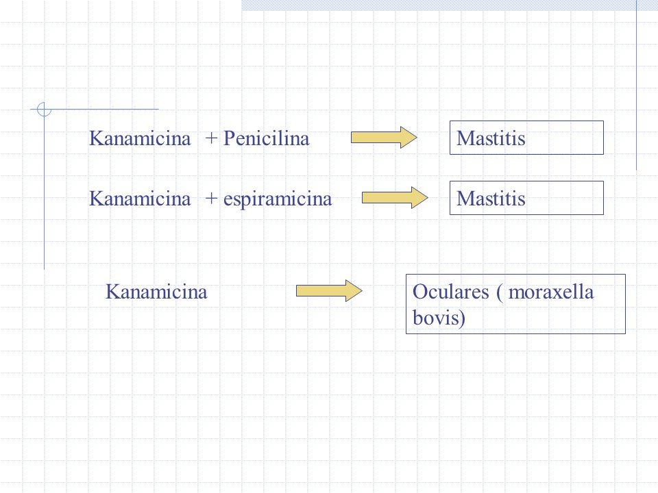 Kanamicina + Penicilina Mastitis Kanamicina + espiramicina Mastitis Kanamicina Oculares ( moraxella bovis)