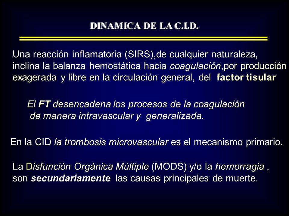 DINAMICA DE LA C.I.D.1).- Producción y liberación masivas de Trombina a la circulación general.
