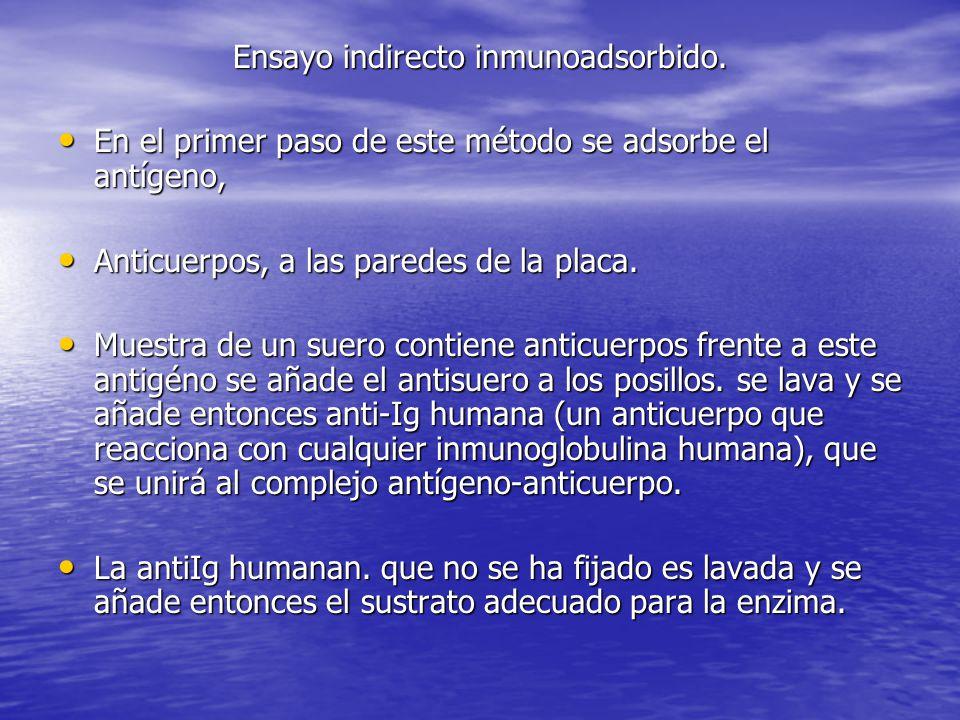 Ensayo indirecto inmunoadsorbido.