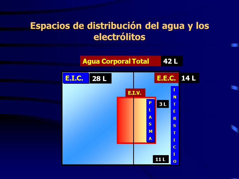 Espacios de distribución del agua y los electrólitos Agua Corporal Total E.I.C. E.E.C. E.I.V. PLASMAPLASMA PLASMAPLASMA INTERSTICIOINTERSTICIO 42 L 28