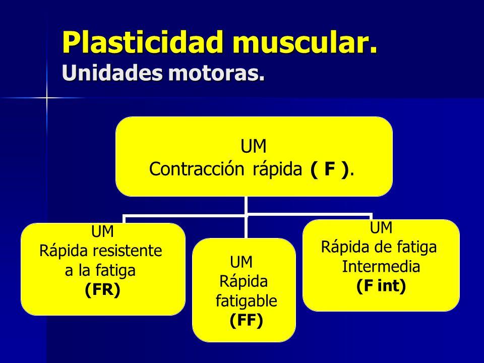 Plasticidad muscular. Unidades motoras. UM Contracción rápida ( F ). UM Rápida resistente a la fatiga (FR) UM Rápida fatigable (FF) UM Rápida de fatig
