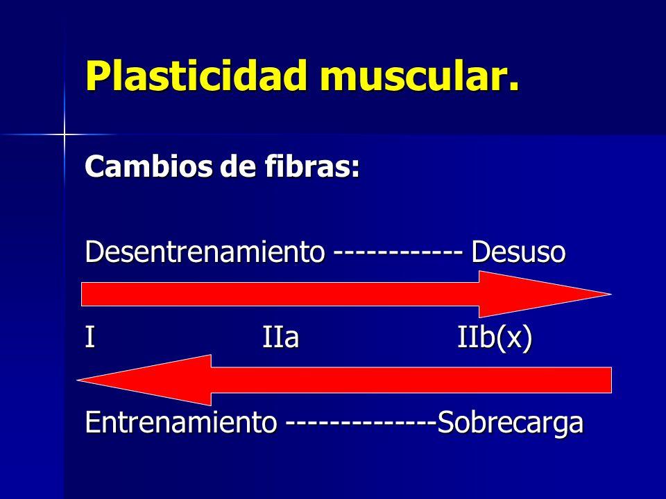 Plasticidad muscular. Cambios de fibras: Desentrenamiento ------------ Desuso I IIa IIb(x) Entrenamiento --------------Sobrecarga