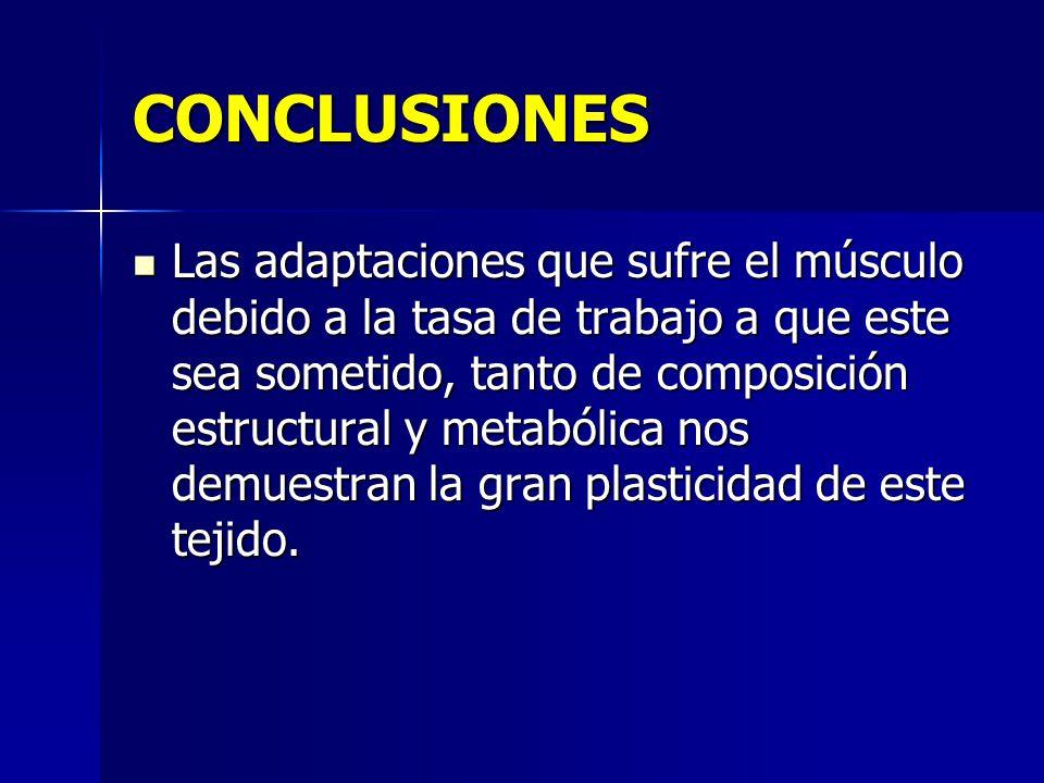 CONCLUSIONES Las adaptaciones que sufre el músculo debido a la tasa de trabajo a que este sea sometido, tanto de composición estructural y metabólica