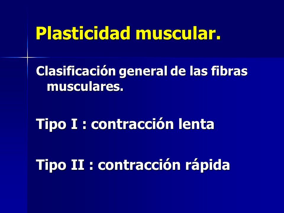 Plasticidad muscular. Clasificación general de las fibras musculares. Tipo I : contracción lenta Tipo II : contracción rápida