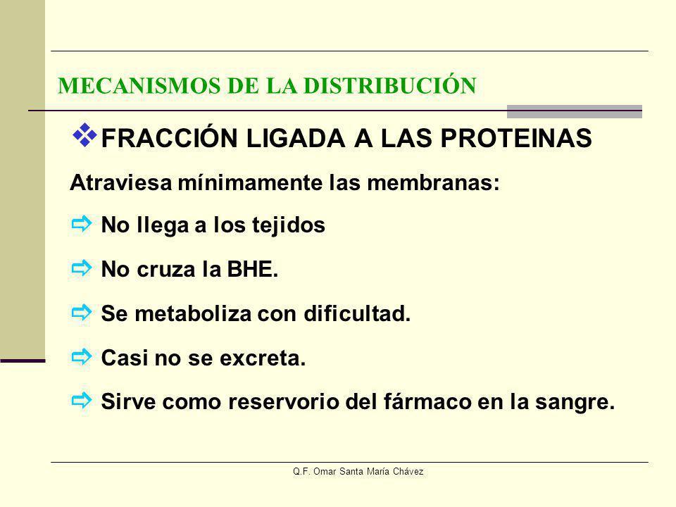 Q.F. Omar Santa María Chávez FRACCIÓN LIGADA A LAS PROTEINAS Atraviesa mínimamente las membranas: No llega a los tejidos No cruza la BHE. Se metaboliz