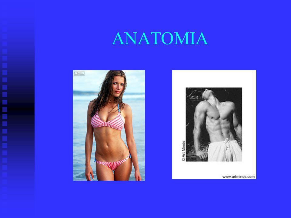 Enzimas Pancreáticas SECRECION ENDOCRINA: islotes de Langerhans (-2%) SECRECION ENDOCRINA: islotes de Langerhans (-2%) ALFA: 25% glucagon ALFA: 25% glucagon BETA: 60 % insulina BETA: 60 % insulina DELTA: 10% somatostatina DELTA: 10% somatostatina