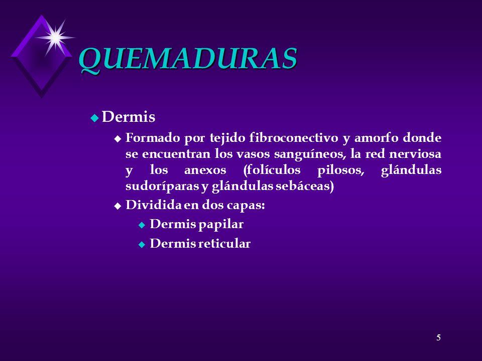 5 QUEMADURAS u Dermis u Formado por tejido fibroconectivo y amorfo donde se encuentran los vasos sanguíneos, la red nerviosa y los anexos (folículos p