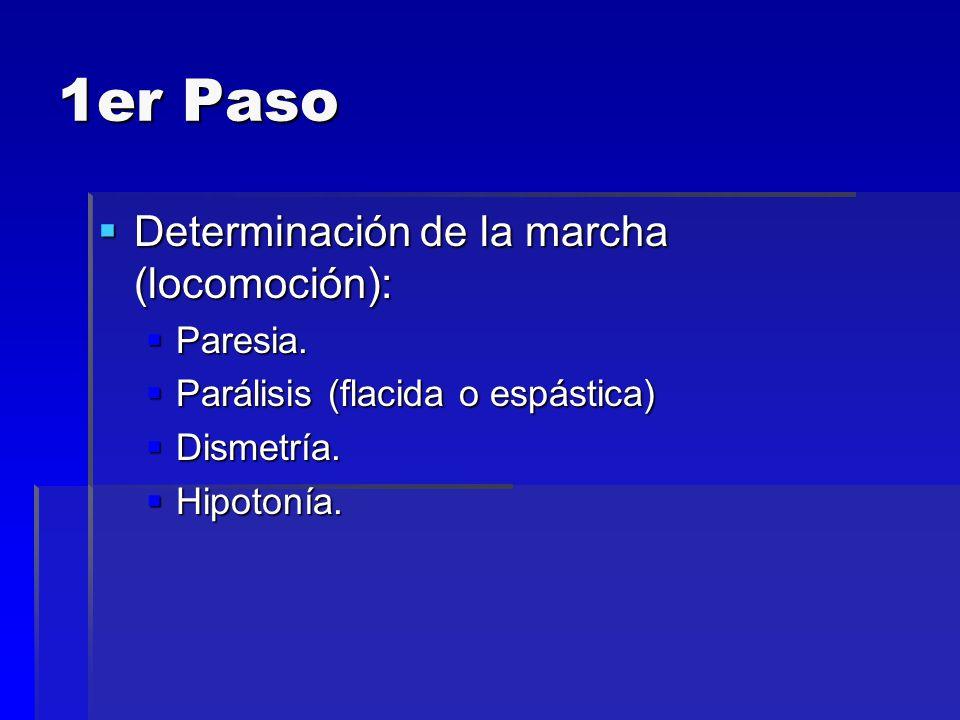 1er Paso Determinación de la marcha (locomoción): Determinación de la marcha (locomoción): Paresia. Paresia. Parálisis (flacida o espástica) Parálisis