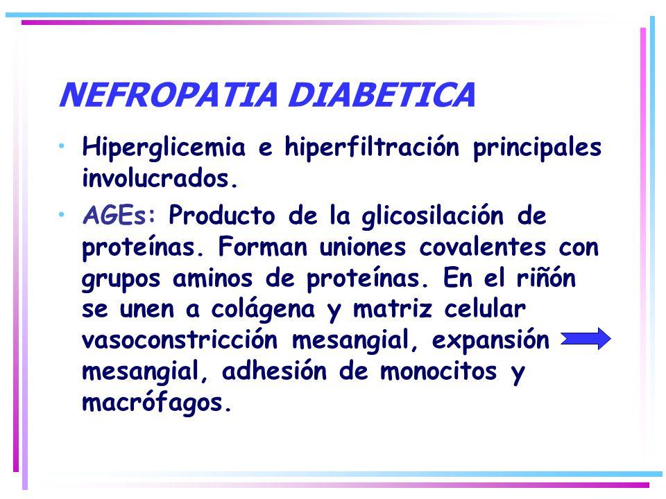 NEFROPATIA DIABETICA Hiperglicemia e hiperfiltración principales involucrados. AGEs: Producto de la glicosilación de proteínas. Forman uniones covalen