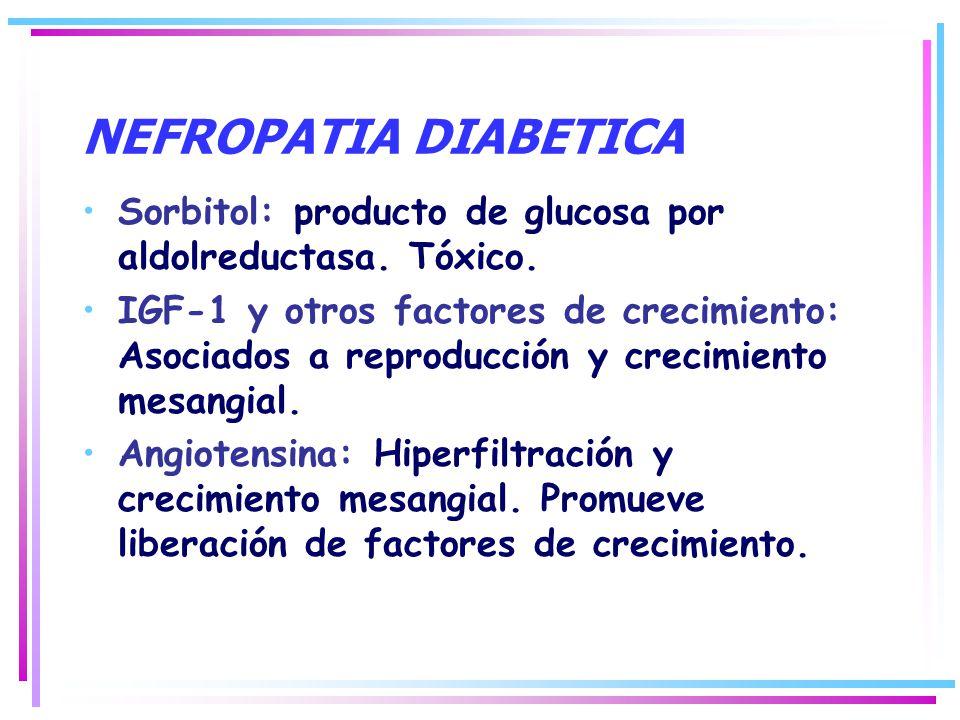 NEFROPATIA DIABETICA Sorbitol: producto de glucosa por aldolreductasa. Tóxico. IGF-1 y otros factores de crecimiento: Asociados a reproducción y creci