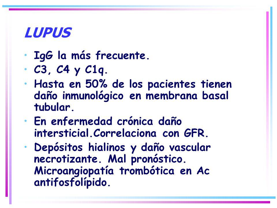 LUPUS IgG la más frecuente. C3, C4 y C1q. Hasta en 50% de los pacientes tienen daño inmunológico en membrana basal tubular. En enfermedad crónica daño
