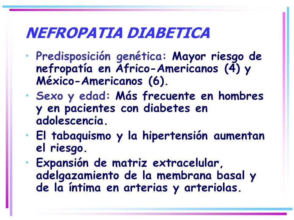 NEFROPATIA DIABETICA Predisposición genética: Mayor riesgo de nefropatía en Africo-Americanos (4) y México-Americanos (6). Sexo y edad: Más frecuente