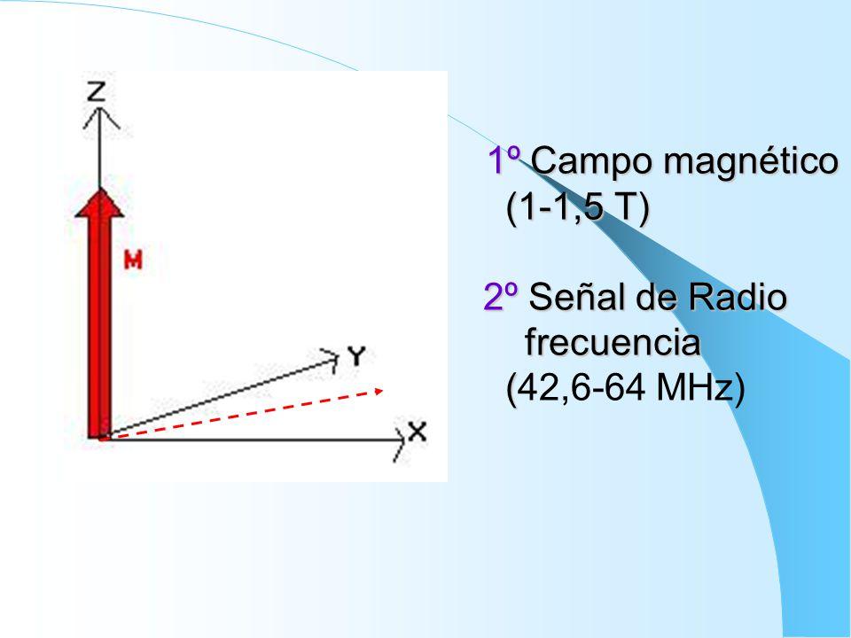 1º Campo magnético (1-1,5 T) 2º Señal de Radio frecuencia ( 1º Campo magnético (1-1,5 T) 2º Señal de Radio frecuencia (42,6-64 MHz)