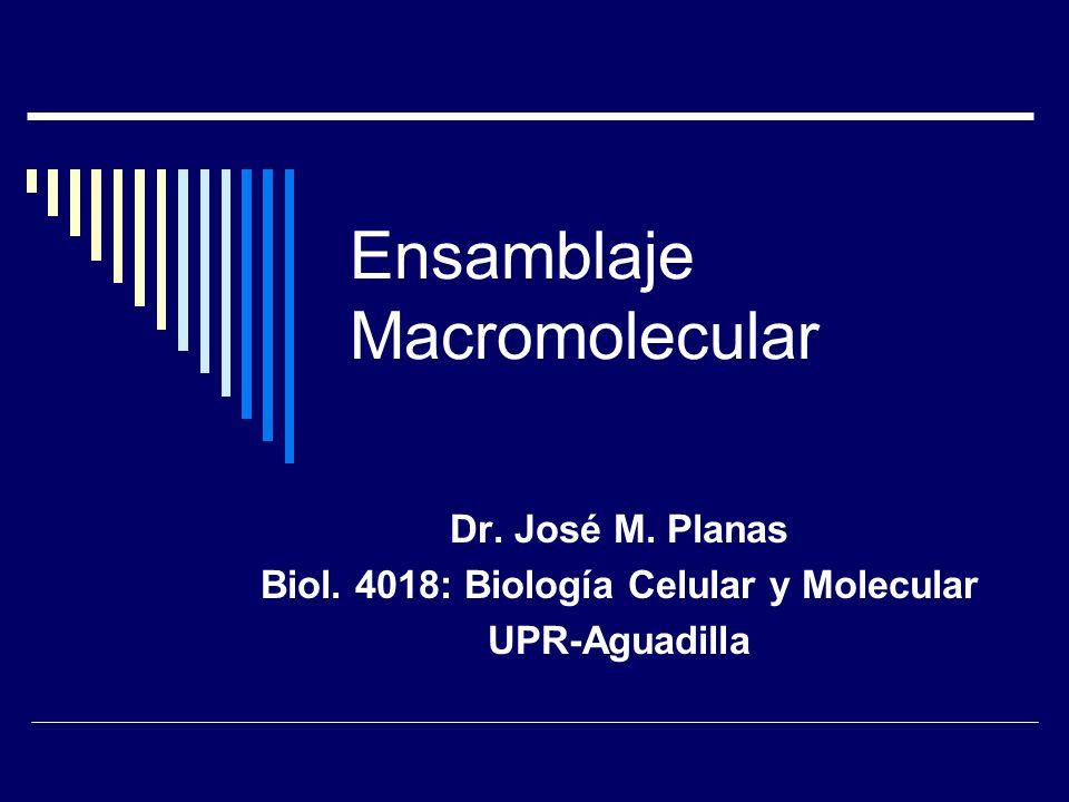 Ensamblaje Macromolecular Dr. José M. Planas Biol. 4018: Biología Celular y Molecular UPR-Aguadilla
