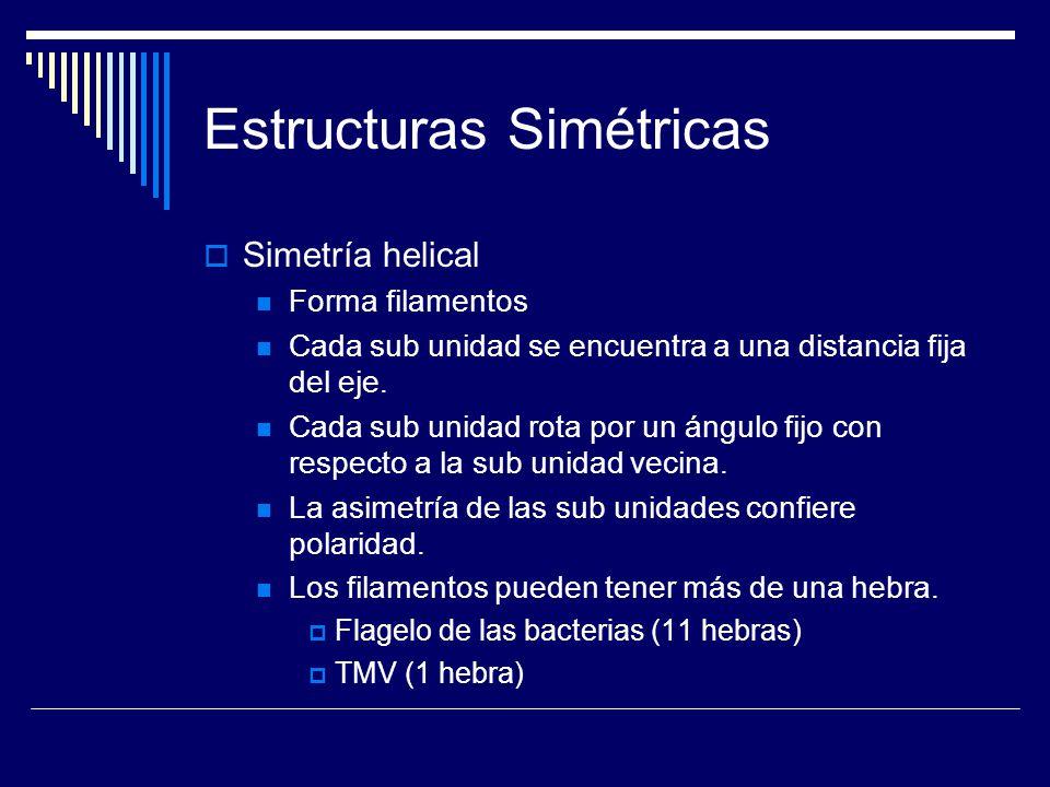 Estructuras Simétricas Simetría helical Forma filamentos Cada sub unidad se encuentra a una distancia fija del eje. Cada sub unidad rota por un ángulo