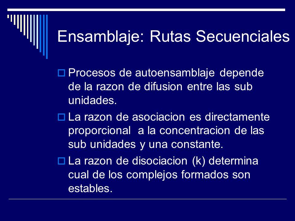 Ensamblaje: Rutas Secuenciales Procesos de autoensamblaje depende de la razon de difusion entre las sub unidades. La razon de asociacion es directamen