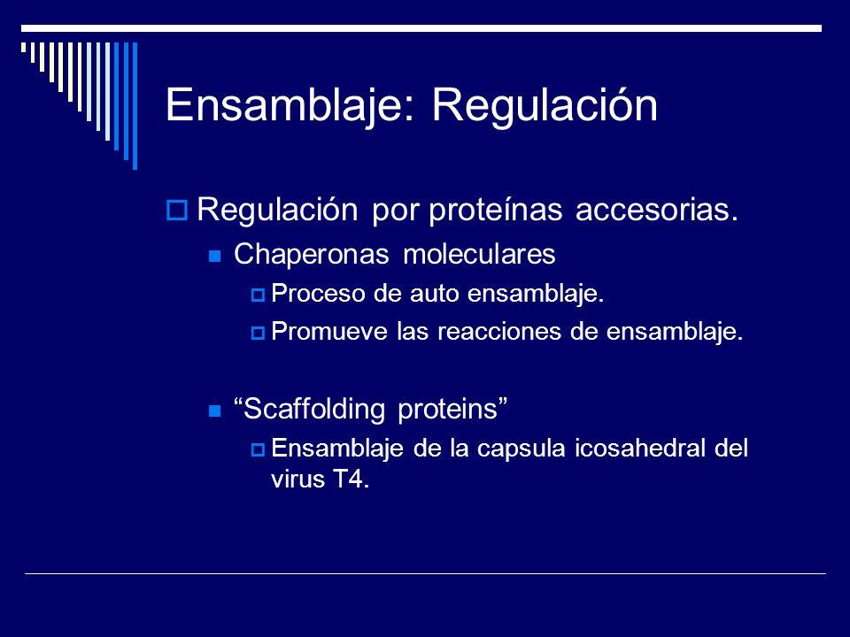 Ensamblaje: Regulación Regulación por proteínas accesorias. Chaperonas moleculares Proceso de auto ensamblaje. Promueve las reacciones de ensamblaje.