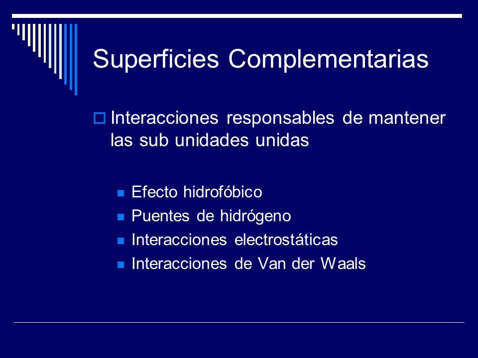 Superficies Complementarias Interacciones responsables de mantener las sub unidades unidas Efecto hidrofóbico Puentes de hidrógeno Interacciones elect