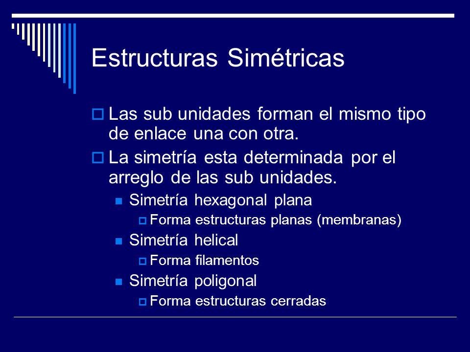 Estructuras Simétricas Las sub unidades forman el mismo tipo de enlace una con otra. La simetría esta determinada por el arreglo de las sub unidades.