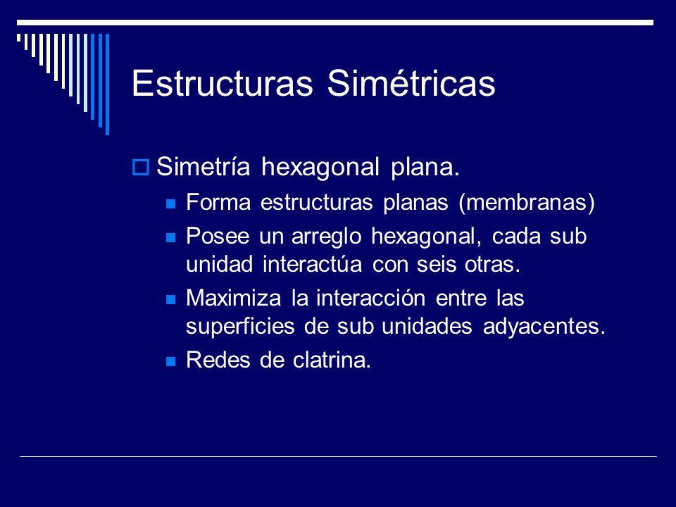 Estructuras Simétricas Simetría hexagonal plana. Forma estructuras planas (membranas) Posee un arreglo hexagonal, cada sub unidad interactúa con seis