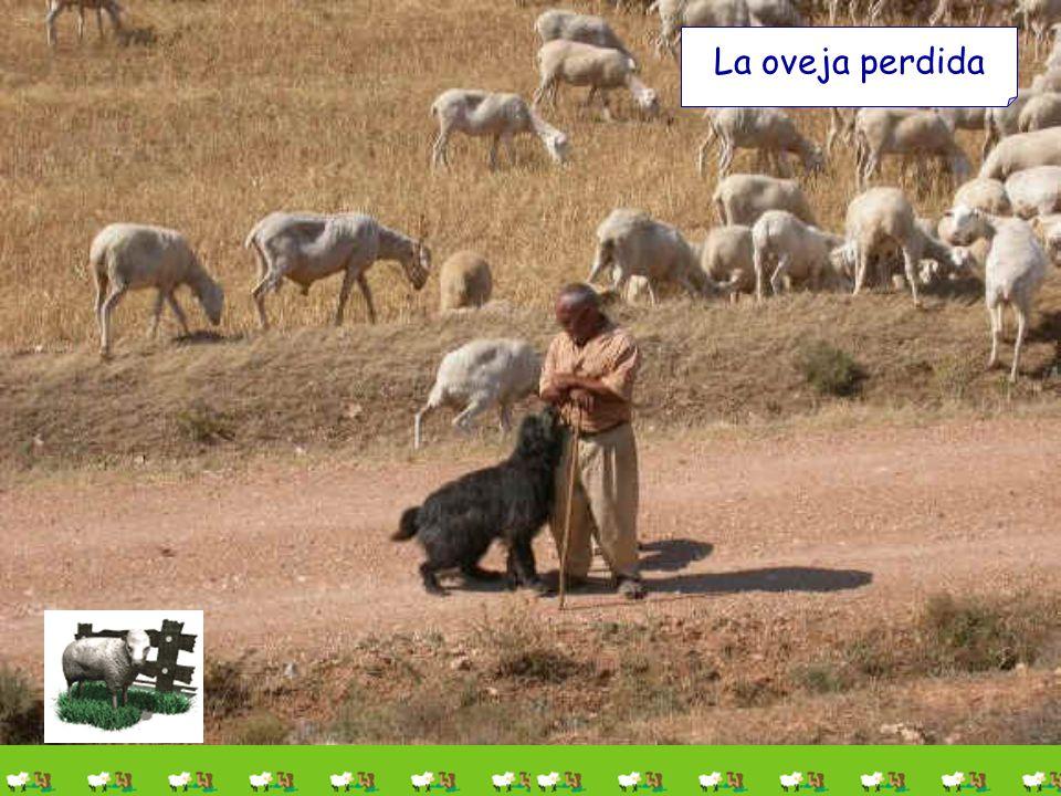 Vamos allá... ¡Ah!, se me olvidaba presentaros a mi ayudante que vivió esta historia: Lucerito Parábola de la oveja perdida