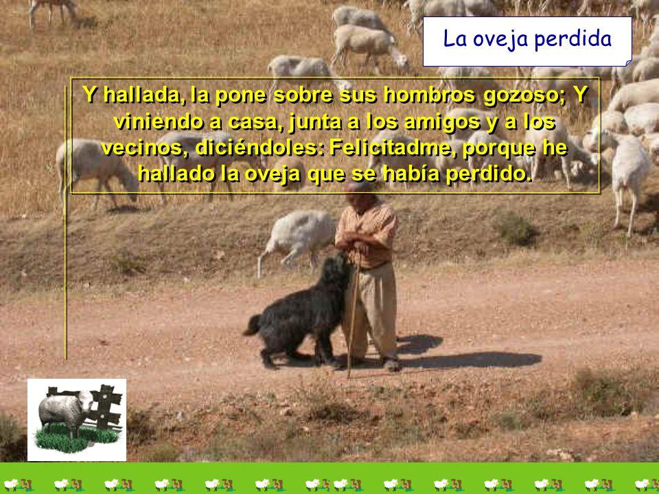 La oveja perdida Y hallada, la pone sobre sus hombros gozoso; Y viniendo a casa, junta a los amigos y a los vecinos, diciéndoles: Felicitadme, porque he hallado la oveja que se había perdido.