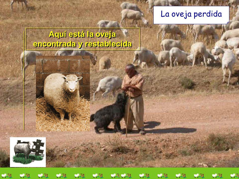 La oveja perdida Y hallada, la pone sobre sus hombros gozoso; Y viniendo a casa, junta a los amigos y a los vecinos, diciéndoles: Felicitadme, porque
