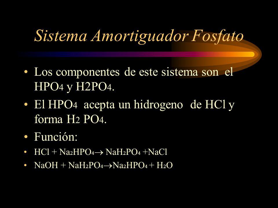 Líquido Intracelular Na, Cl y Ca K, PO 4, SO 4 y Mg Proteínas
