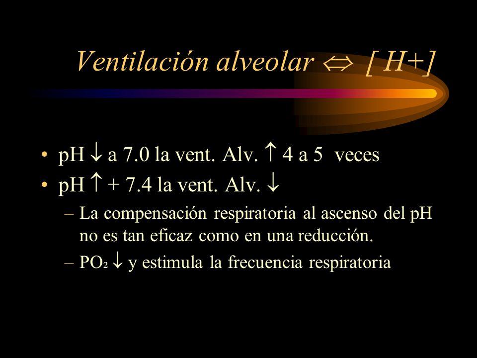 Regulación Respiratoria ventilación CO 2 pCO 2 [H+] pH doble = 0.23 7.4 - 7.63 ventilación CO 2 pCO 2 [H+] pH cuarta parte = 0.45 7.4 - 6.95