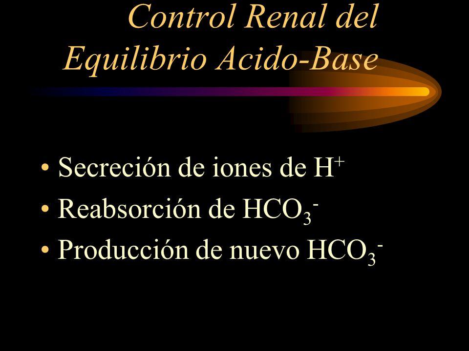 Control Renal del Equilibrio Acido-Base Los riñones controlan el equilibrio ácido-base excretando una orina ácida o básica.