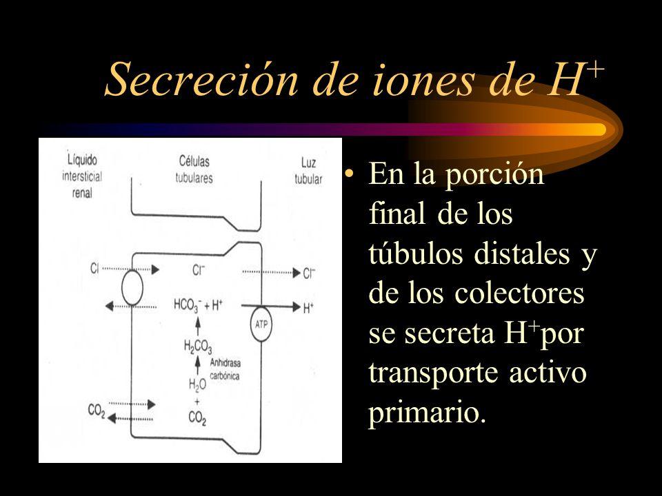Secreción de iones de H + En los tubulos proximales se secreta H+ por transporte activo secundario