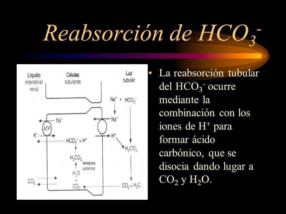 Reabsorcion de HCO 3 - PRINCIPIO BÁSICO : Por cada ion de H+ que se secreta, se reabsorbe un ion de HCO3-.