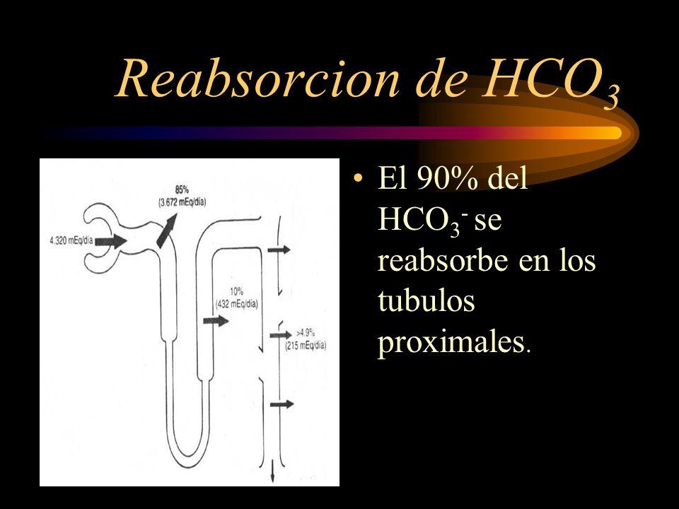 La reabsorción tubular del HCO 3 - ocurre mediante la combinación con los iones de H + para formar ácido carbónico, que se disocia dando lugar a CO 2