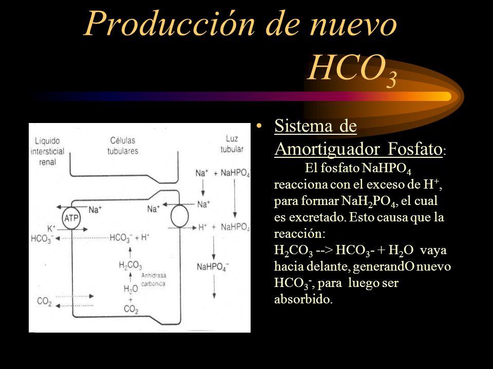 Producción de nuevo HCO 3 - PRINCIPIO BÁSICO : Siempre que un H + secretado a luz tubular se combine con un amortiguador distinto al HCO 3 -, el efect