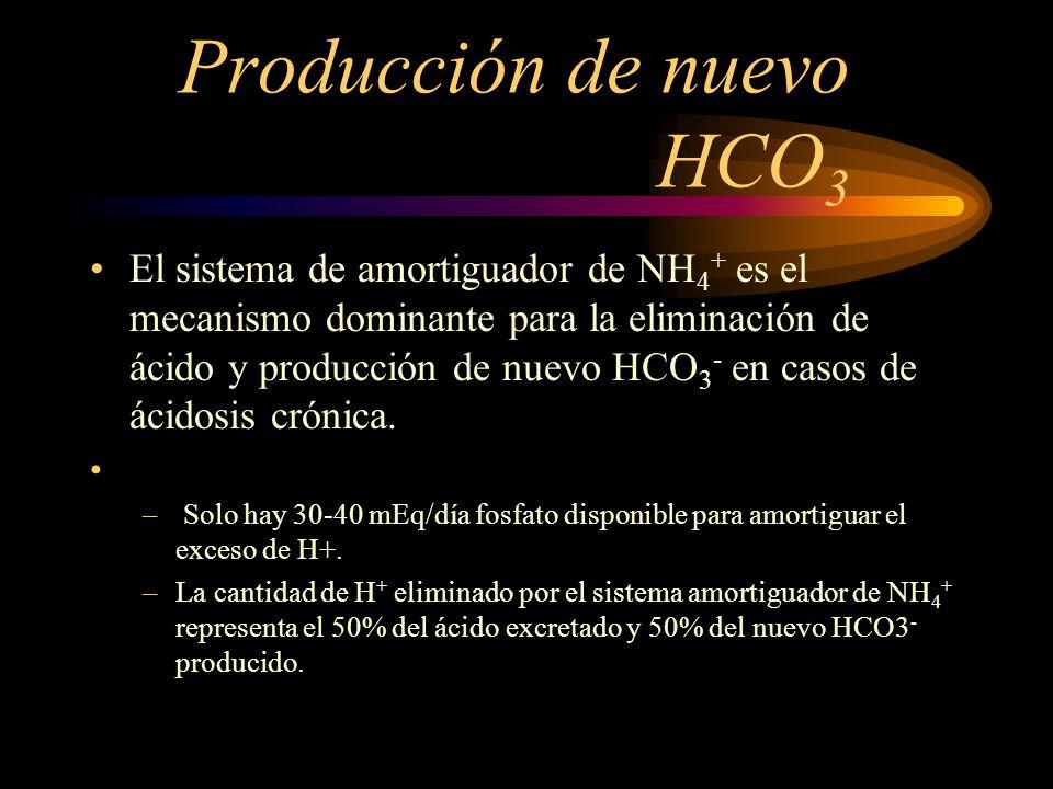 Producción de nuevo HCO 3 Sistema de Amortiguador Amonio: PRINCIPIO BASICO: Por cada glutamina degradada, se genera dos iones de HCO 3 -. El NH 4 + se