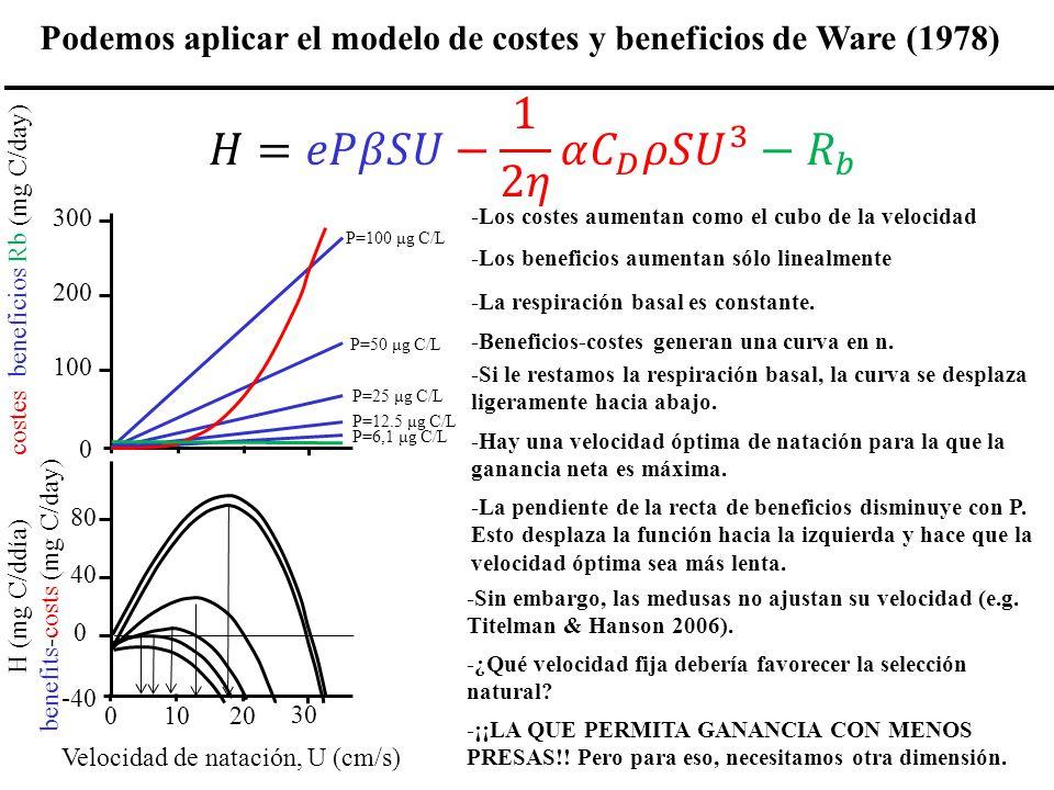 0102030 Velocidad de natación, U (cm/s) -40 0 40 80 H (mg C/ddía) costes, beneficios Rb (mg C/day) 0 100 200 300 P=100 μg C/L P=50 μg C/L P=25 μg C/L