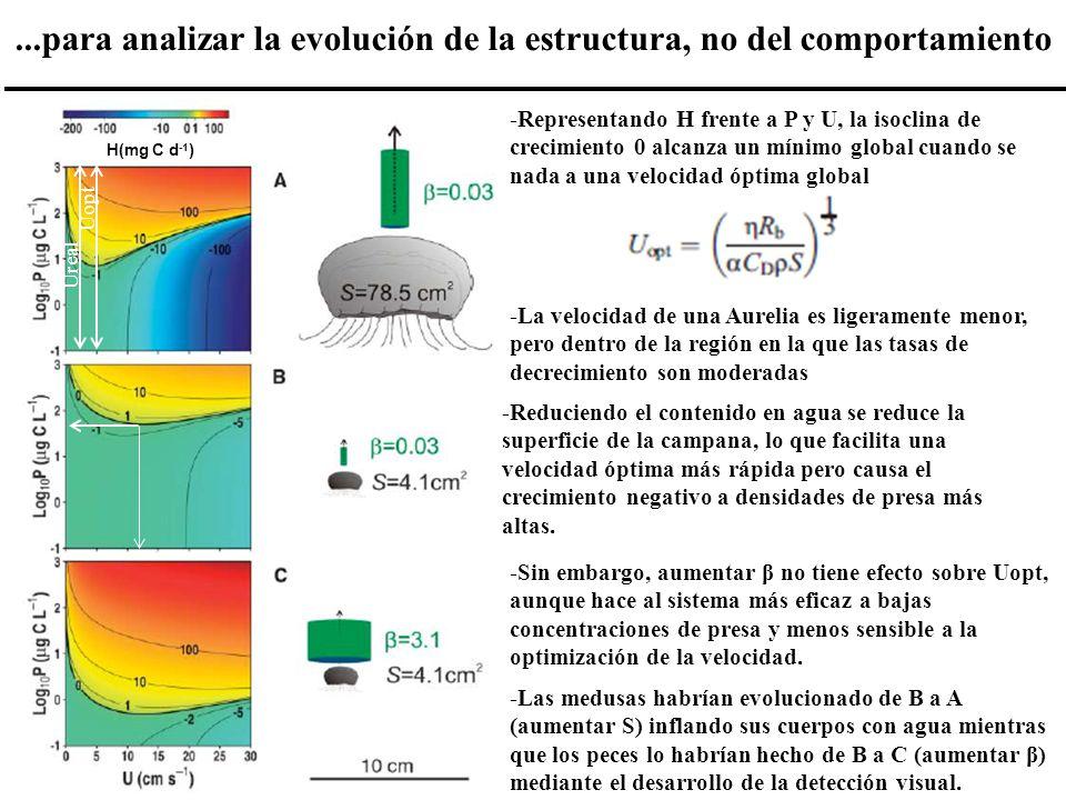 ...para analizar la evolución de la estructura, no del comportamiento H(mg C d -1 ) -Representando H frente a P y U, la isoclina de crecimiento 0 alca
