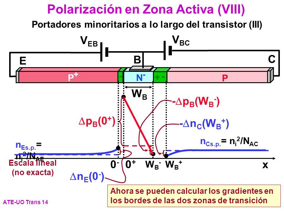 Polarización en Zona Activa (VIII) ATE-UO Trans 14 Portadores minoritarios a lo largo del transistor (III) P+P+ P N-N- E B C WBWB + - - + V EB V BC n