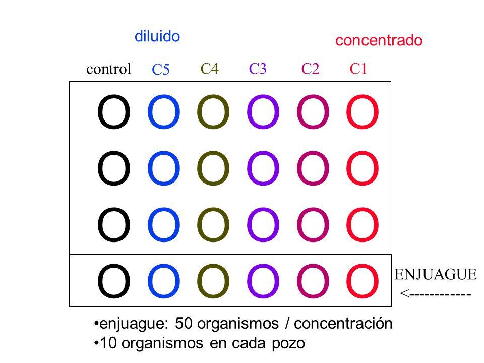 O O O O O O O O O O O O control C5 C4C3C1C2 ENJUAGUE <------------ enjuague: 50 organismos / concentración 10 organismos en cada pozo diluido concentr